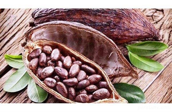 کشت نهال کاکائو برای اولین بار در رباط کریم