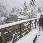 تصاویری دیدنی از بارش برف بهاری در آمریکا