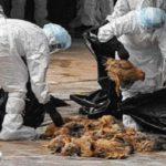 واکنش وزارت بهداشت به شیوع آنفلوآنزای فوق حاد پرندگان