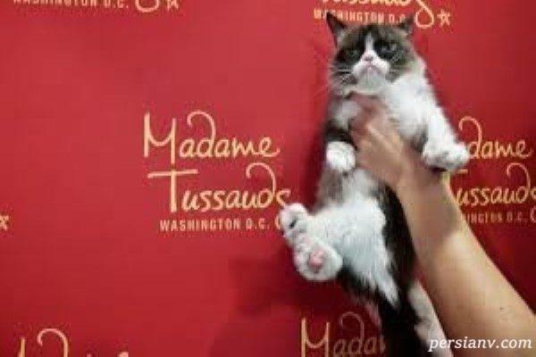گربه معروف