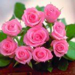 بهترین گل ها برای هدیه دادن به همراه معانی مختلف آن ها