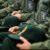 فرماندهان ارشد سپاه پاسداران که توسط ترامپ تحریم شدند!!