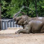 تفریح تابستانی لذتبخش حیوانات در باغ وحش را ببینید!