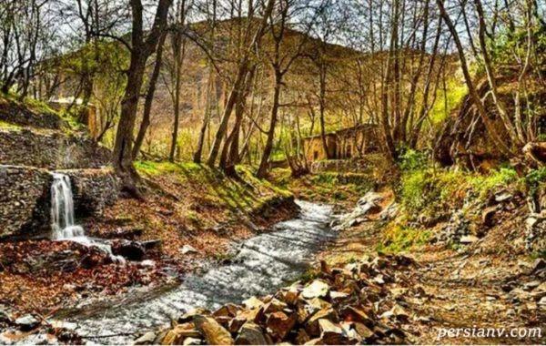 افشای راز جنگل جیغ