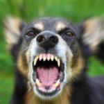 حمله سگ خانگی به زن باردار و واکنش تند کاربران به آن !!
