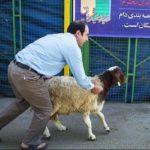 ذبح دام در عید قربان و هشدار وزارت بهداشت در خصوص آن!