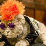شوی لباس گربه ها در نیویورک را ببینید!!