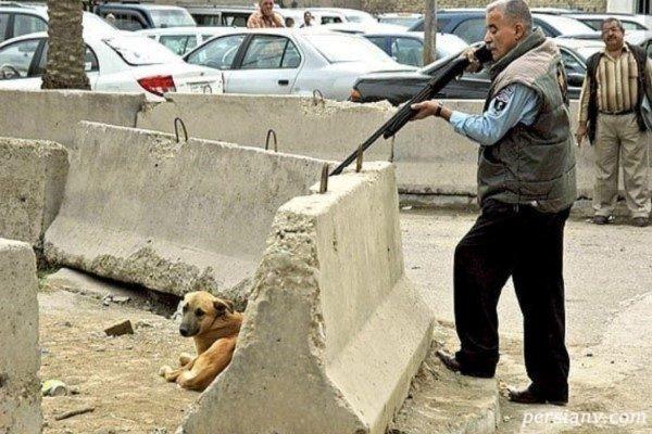 واقعیت ماجرای جنجالی کشتار سگ ها در کهریزک با تزریق سم و اسید!!