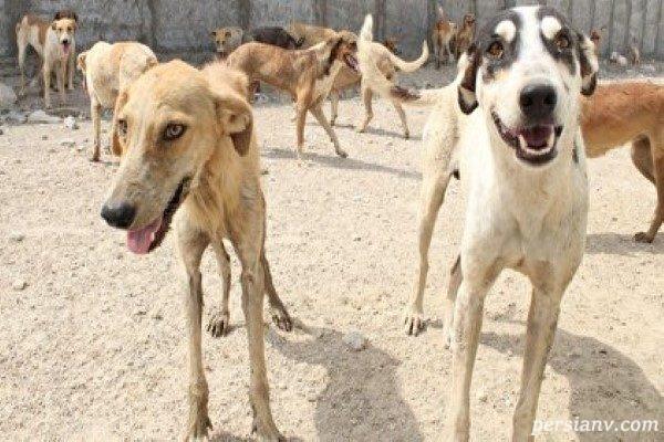 کشتار سگ ها در کهریزک