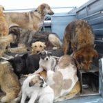 کشتار سگ های کهریزک با آمپول اسید و واکنش شهرداری تهران!!