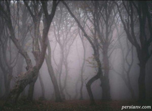 افشای راز جنگل جیغ یا کابوس وحشت در طرقبه مشهد