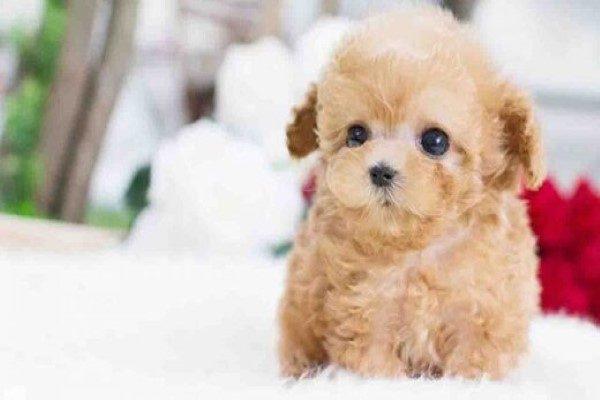 ماجرای عجیب دزدیدن سگ یک زن در سعادت آباد | پسرم ۴۰ میلیون تومان می ارزد!!