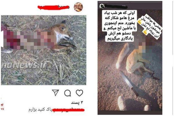 کشتار حیوانات وحشی