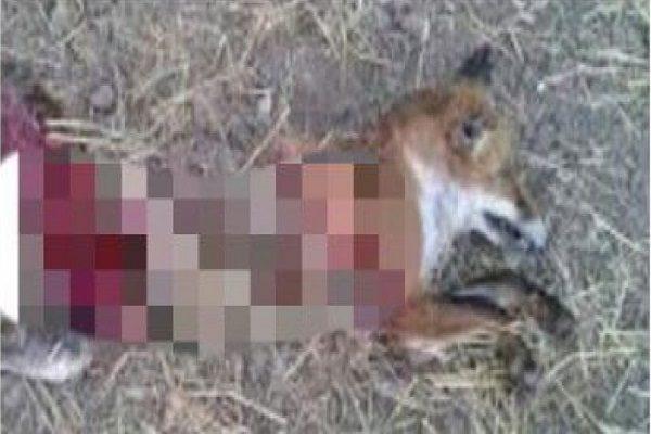 عامل انتشار فیلم سلاخی و کشتار حیوانات وحشی دستگیر شد!!