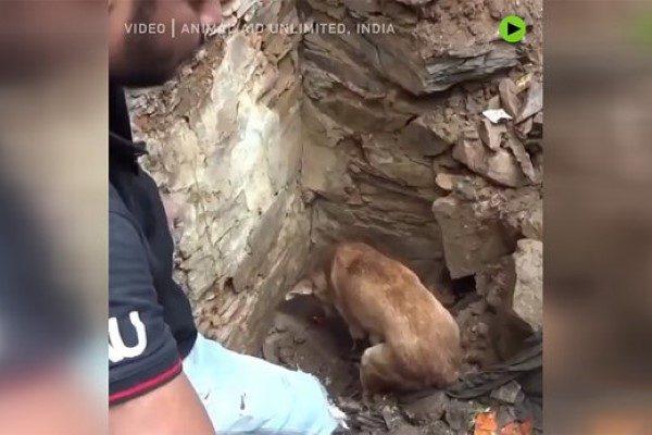 تلاش سگ برای نجات نوزادانش