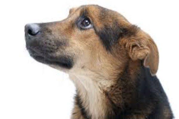 ویدئویی شگفت انگیز از تلاش سگ برای نجات نوزادانش از زیر آوار!!
