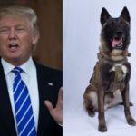 استقبال ترامپ و ملانیا از سگ شرکت کننده در عملیات کشتن ابوبکر البغدادی!!