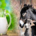 دوشیدن شیر الاغ در برنامه شبکه سوم سیما توسط داور مسابقه!!