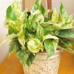 گلدان های خاص و مناسب جهت پاک کردن هوای خانه