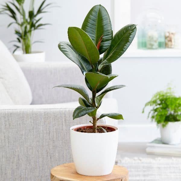 پاک کردن هوای خانه