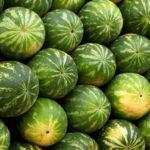 ترفندهایی موثر برای تشخیص هندوانه رسیده برای شب یلدا