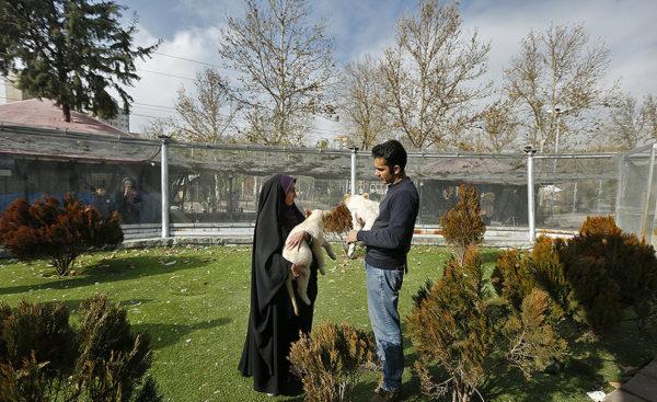 ورود هیر و دنا توله شیرهای سفید آفریقایی به ایران!!