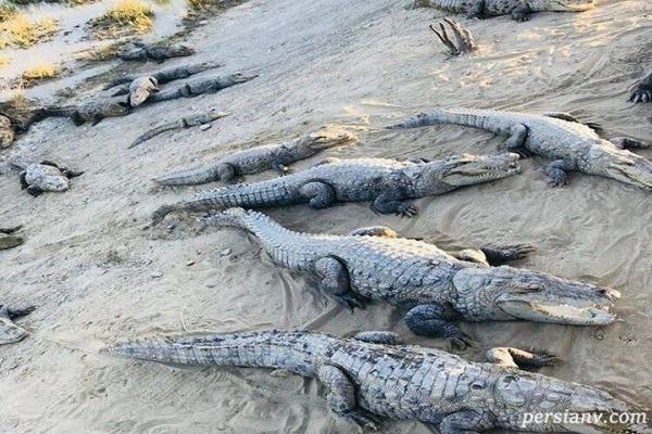 خطر حمله گاندوها به سیل زدگان سیستان و بلوچستان
