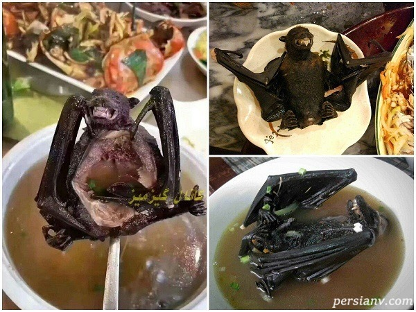 سوپ خفاش در چین