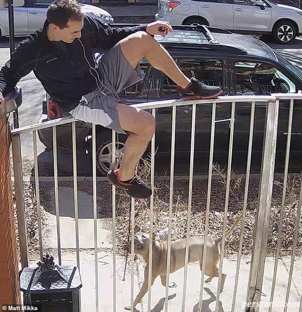 لحظه حمله سگ