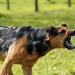 لحظه حمله سگ وحشی به مرد جوان در حال ورزش کردن