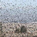 هجوم پرندگان به فروشگاه صحنه وحشتناکی را رقم زد