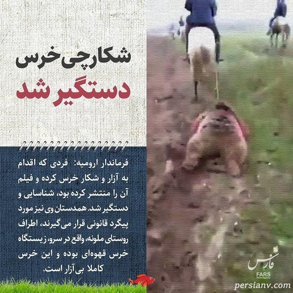کشتن خرس در ارومیه