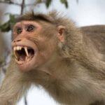 لحظه کودک ربایی وحشتناک توسط یک میمون در روز روشن