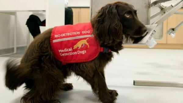سگ های کرونایاب ,تست کرونا در فرودگاه امارات توسط سگ های تعلیم دیده