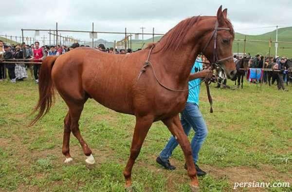 مسابقه اسب دوانی عشایر
