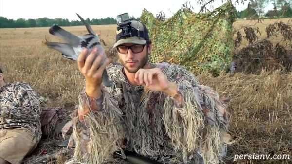 شکار کبوتر