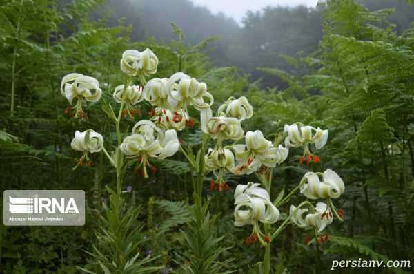 نادرترین گل جهان