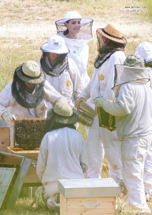 آنجلینا جولی و زنبورداران