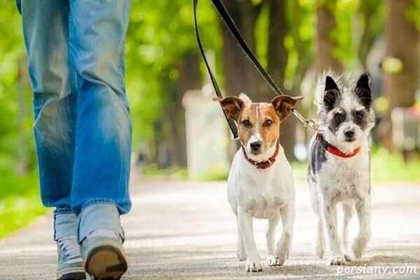 برخورد پلیس با سگ گردانی