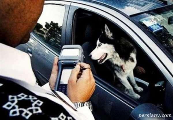 اظهار نظر رییس پلیس راهور تهران درباره سگ گردانی و موتور سواری زنان