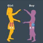 آموزش تعیین جنسیت فرزند قبل از لقاح