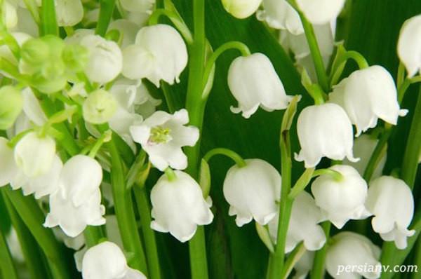 هفده عطر طبیعی که میل جنسی را زیاد میکنند