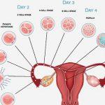 علائم بارداری بعد از لقاح چه زمانی ظاهر میشوند؟