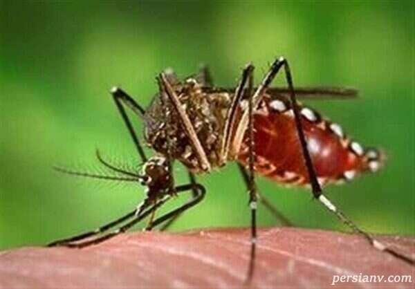 ویروس زیکا و ناباروری در مردان