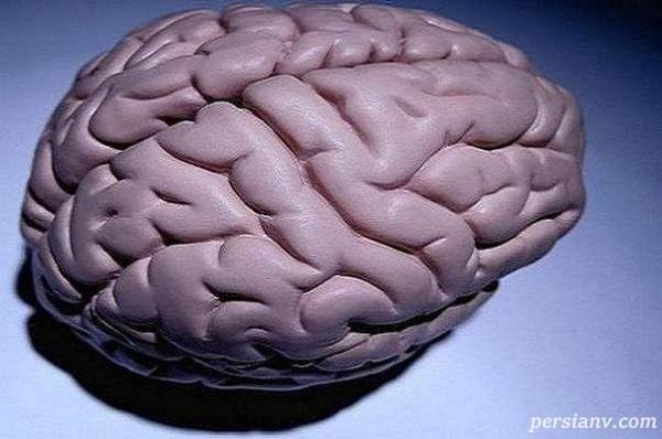 تغییرات مغز در بارداری