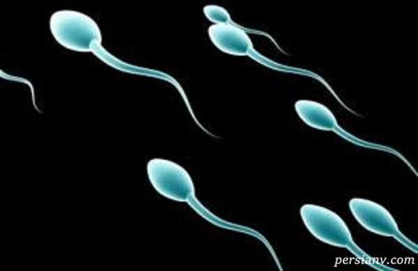 اسپرم در مردان و چگونگی افزایش و تقویت آن