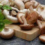 قارچ و خوردن آن در دوران بارداری چه مزایای دارد؟ | قارچ جادویی چیست؟
