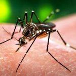 ویروس زیکا (Zika Virus) چه تاثیرات بر ناباروری مردان دارد؟ + عکس