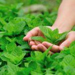 هفده عطر طبیعی که میل جنسی را زیاد میکنند + تصاویر