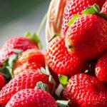 توت فرنگی در بارداری | باید در بارداری این میوه را بخورید